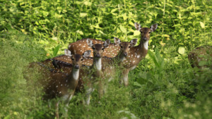Deer, Wildlife Sanctuaries in Kerala