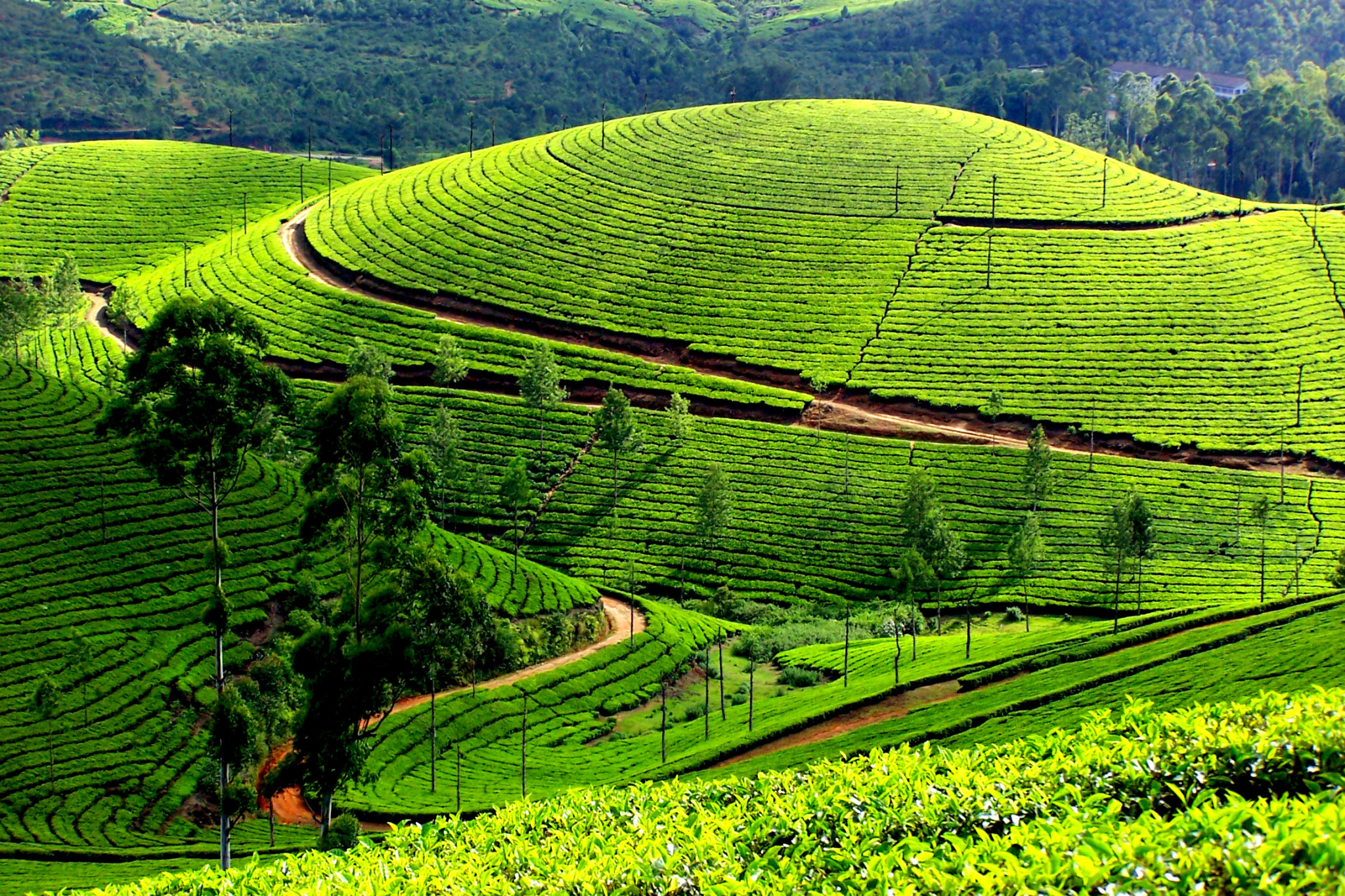 Munnar, Best place to visit in Kerala