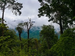 Coorg, Best weekend attraction around Bengaluru