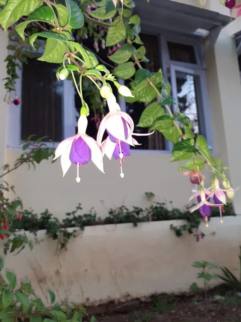 flowers in ooty