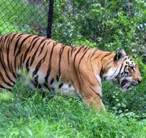 chennai zoo