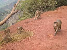monkey point