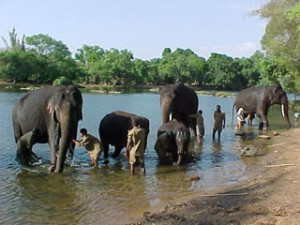 dubare elephant camp in coorg