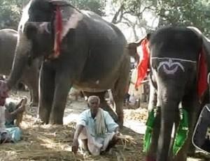 Sonepur Mela Patna.