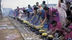 Pongal celebration in Tamil Nadu
