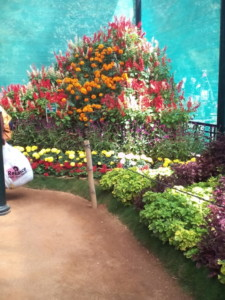 Lalbagh Flower Show, Bangalore