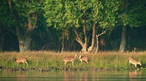 Sundarban National Park-Sajnekhali Watch Tower