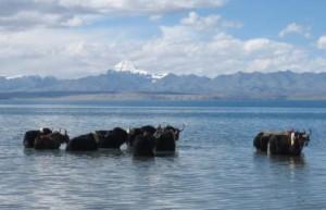 Kailash Manasarovar lake