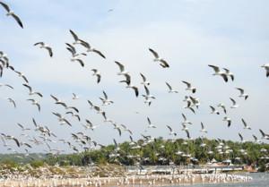 Kadalundi - One of the Most visited Bird Sanctuaries in Kerala
