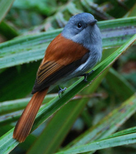 Pathiramanal Bird Sanctuary