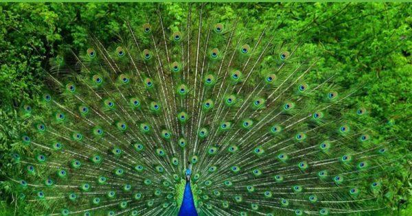 peacock sanctuary in Tamil nadu,