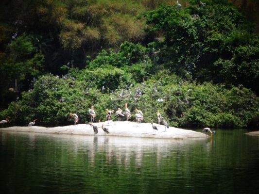 Bird's View of Ranganatittu Bird Sanctuary