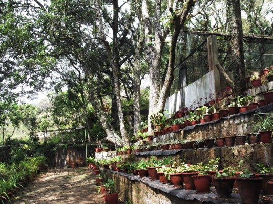 Botanical Garden & Orchidarium